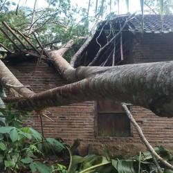 Satu Rumah di Cikulur Hancur Tertimpa Pohon