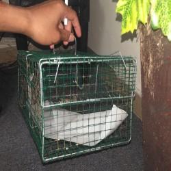 Duh, Kantor DPRD Pandeglang di Pasangi Perangkap Tikus