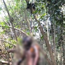 Geger, Warga Ciruas Temukan Mayat Tergantung di Pohon