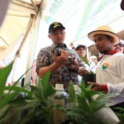 Peringati HMPI, Pemprov Banten Tanam 15 Ribu Pohon di 15 Hektare Lahan