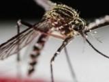Filipina Diserang Nyamuk Aedes Aegypti, 622 Tewas