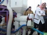 Produksi Pertanian Surplus, Bupati Serang Kampanyekan Beras Jaseng